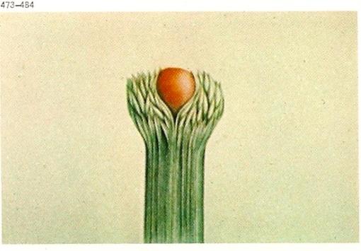 from The Gardener