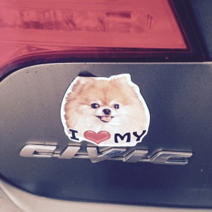 As it was pointed out to me, it looks like the Pomeranian is endorsing Civics